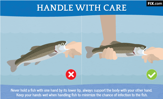 Handle Fish with Care