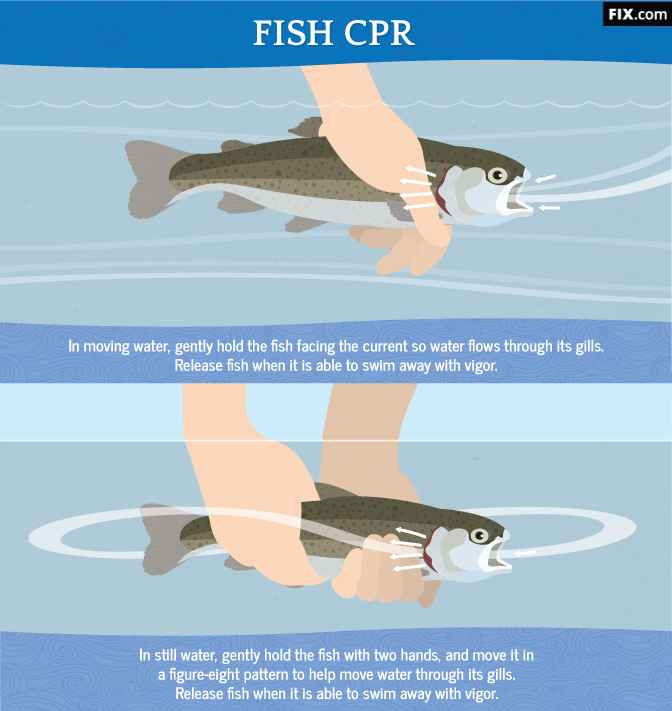Fish CPR