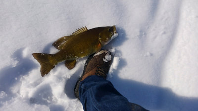 Winter smallmouth bass fishing